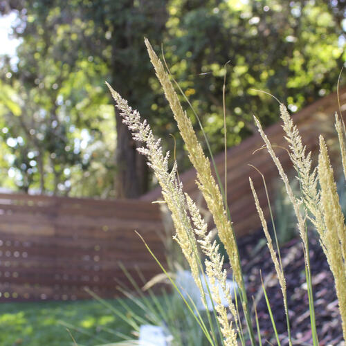 Mulch and Drought Tolerant Plants