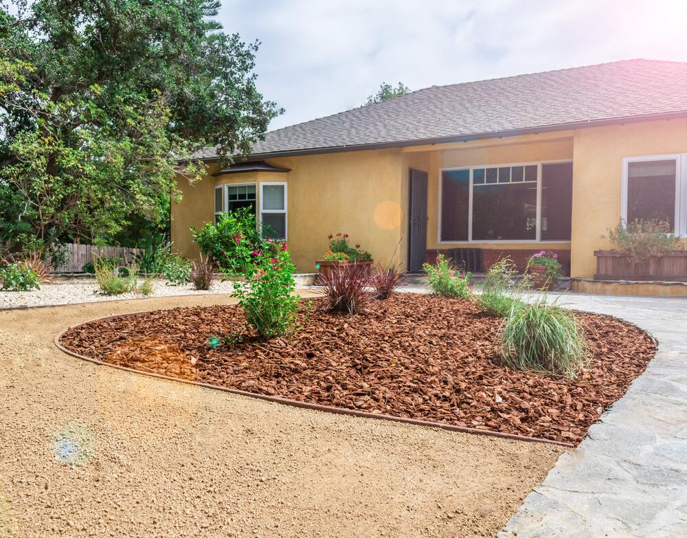 drought-tolerant yard