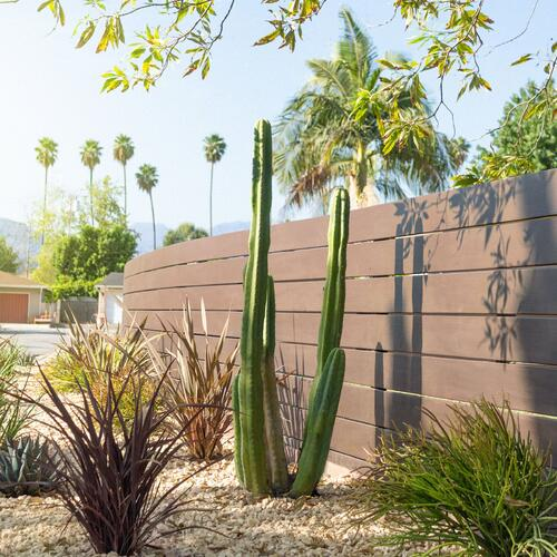 Cacti and Drought-Tolerant Plants